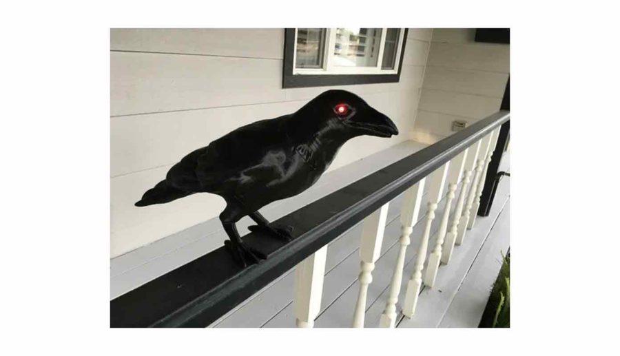 Halloween Crow - Halloween Krähe